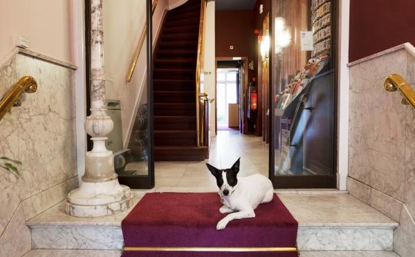 Hotel Amsterdam: Honden welkom