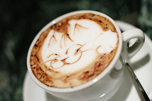 cat-a-cino cappuccino kat