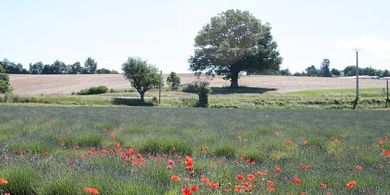 Provence en Cote d'Azur in polaroids