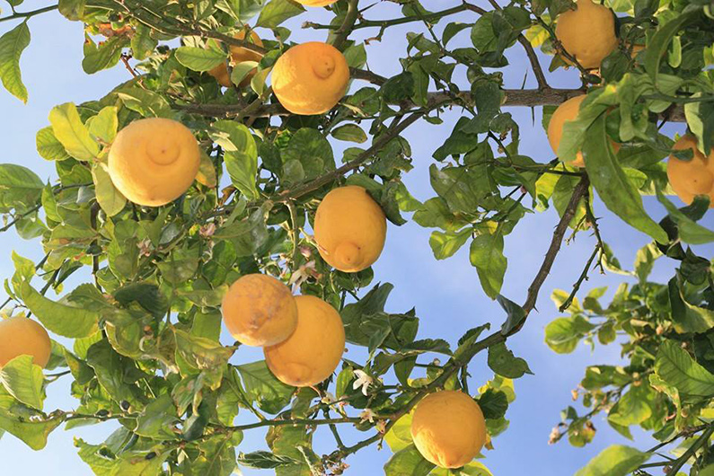 finca-Ibiza-nederlanders-boomgaard