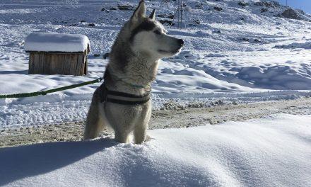 Travelvideo: sneeuw, husky's en yurts in Les Menuires