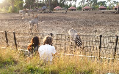 Logeren in Safari Resort Beekse Bergen